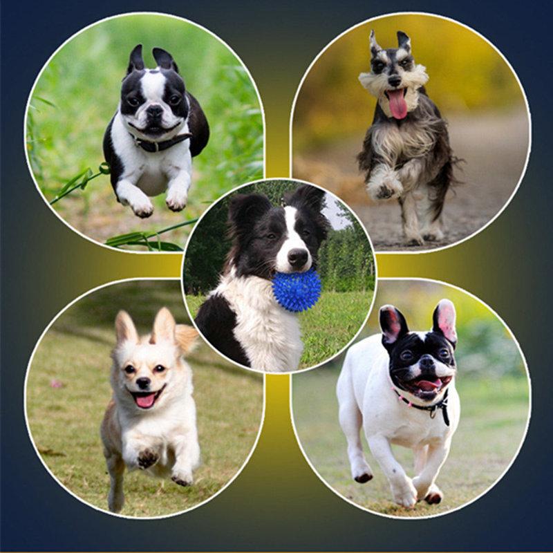 comment réduire la puissance destructrice de chiens