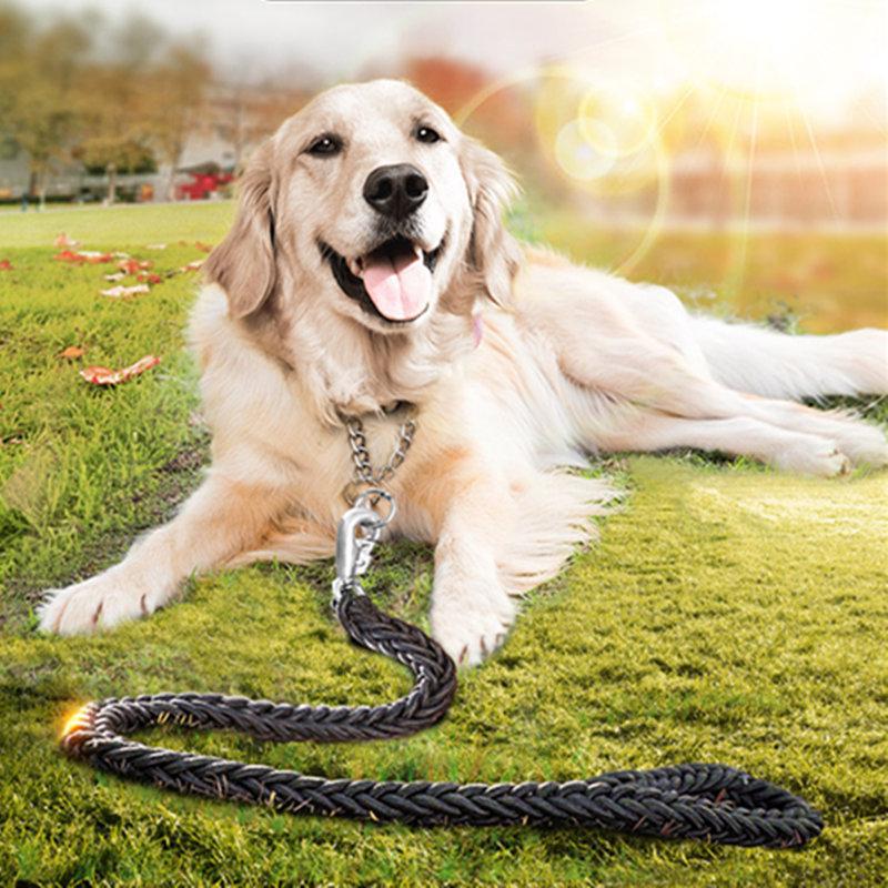 comment former le golden retriever chien comment former retri doré
